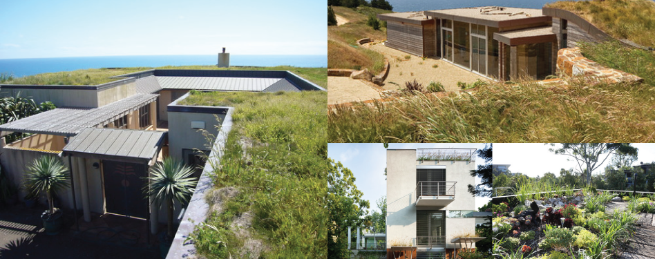 Living roofs put down roots green home guide for Green home guide