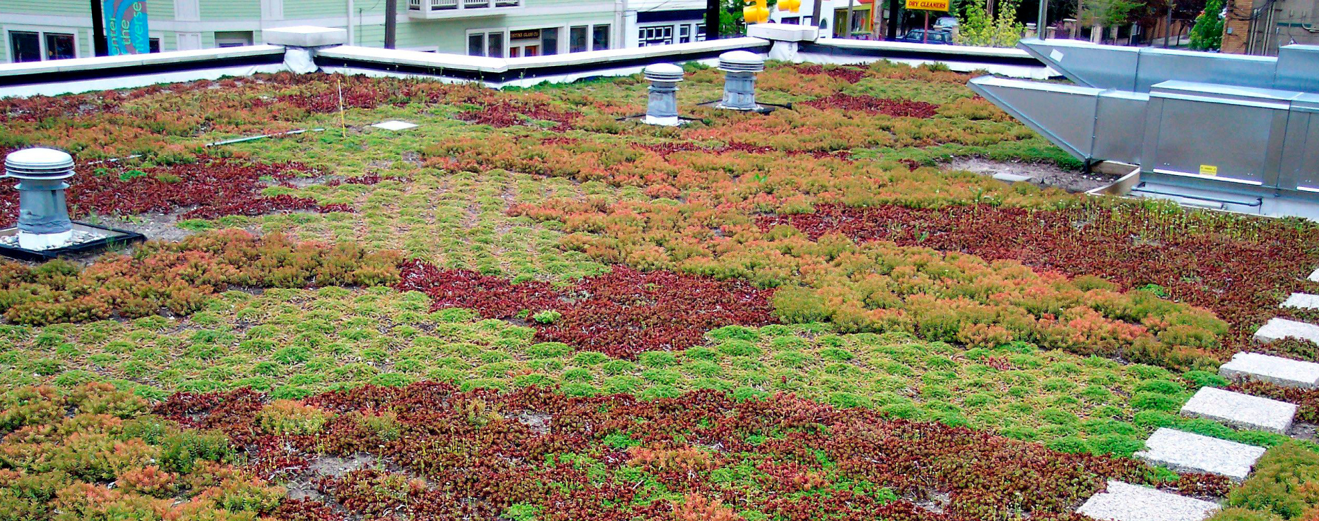 Planting a living green roof green home guide for Green home guide